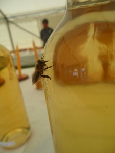 Bees visiting the marquee tasting the mead